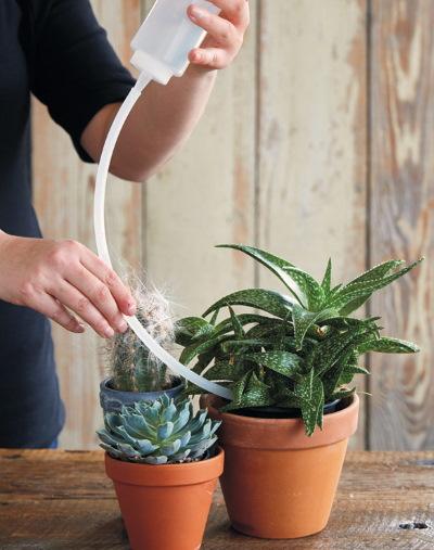 Молочай цветок комнатный. Фото, уход, приметы, как размножить, виды, чем опасен, как посадить