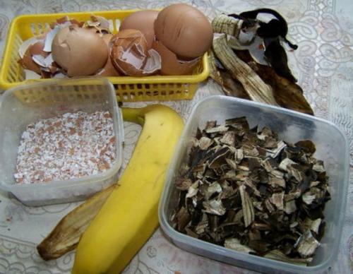 Кожура банана как удобрение для цветов, рассады помидор, огурцов, растений. Как приготовить, пользоваться