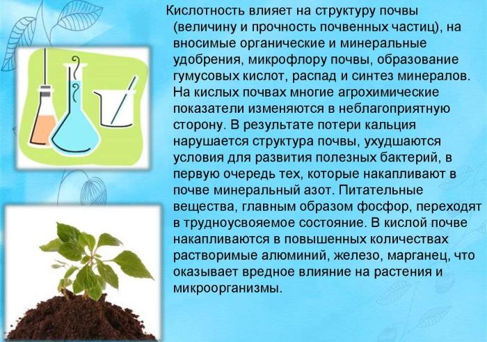 Кислотность почвы для растений. Таблица для домашних, огорода, сада
