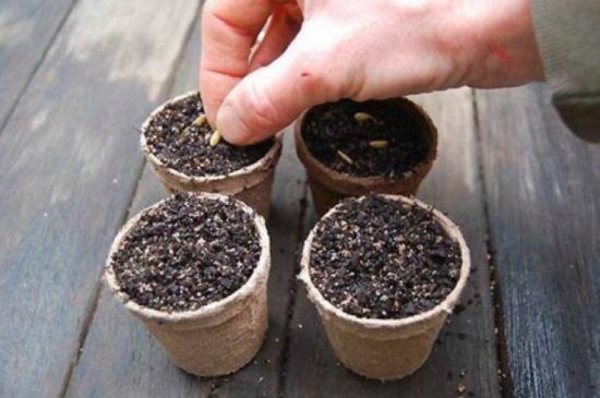 Как вырастить огурцы на подоконнике зимой, весной, летом. Сорта, уход, фото