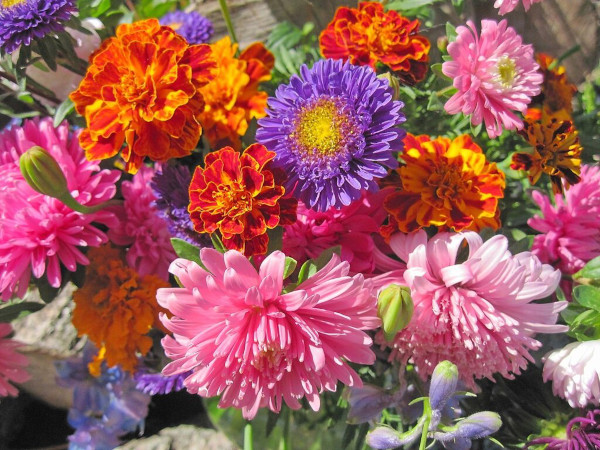 Осенние цветы. Фото с названиями для сада, многолетние