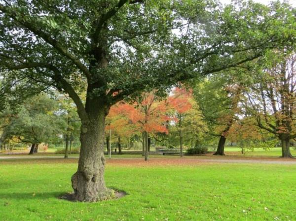 Ольха дерево. Фото, как выглядит, описание, где растет