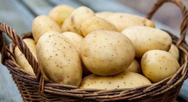 Картофель Колобок. Описание сорта, фото, отзывы